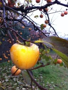 Høstfrukt