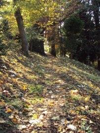 Til slutt kunne jeg gå støtt og målrettet gjennom skogen.